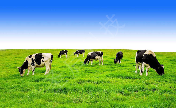 智慧畜牧业物联网—智能畜禽养殖大数据云平台